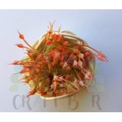 """Mini Stamen """"bush"""" - GREEN/CORAL"""