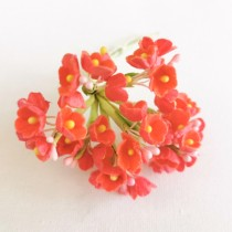 Small Flowers - CORAL