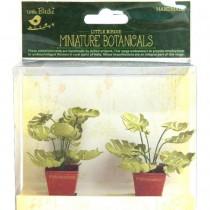 Miniature Botanicals - Mini...