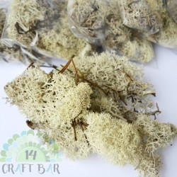 Dried Reindeer Moss - Eco