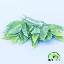 Leaf 123