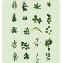 PET Stickers - JUNGLE FLORA...
