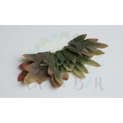 Leaf 034