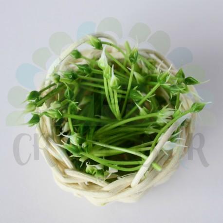 """Mini Stamen """"bush"""" - GREEN/WHITE"""