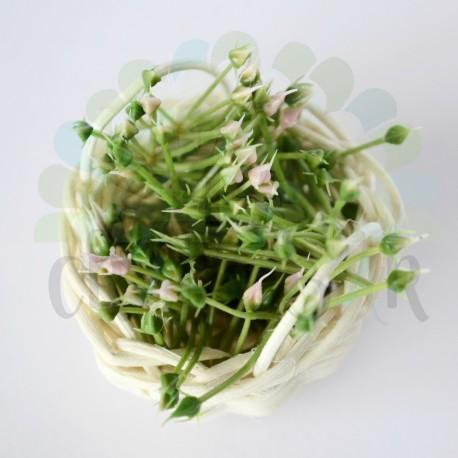 "Mini Stamen ""bush"" - GREEN/PINK"