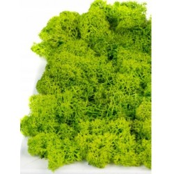 Dried Reindeer Moss - Green